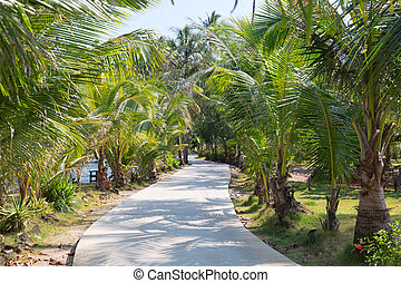 road through the palm trees