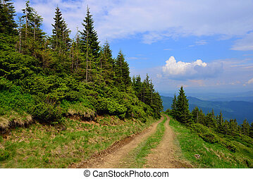 Road through the pine forest in the Ukrainian Carpathians