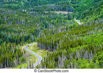 Road Through the Rockies