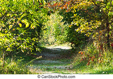 road through the trees in forest