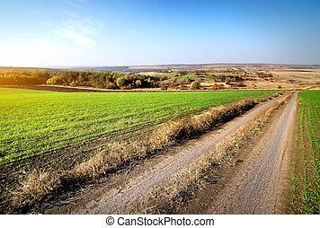 Road through winter crops
