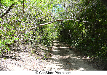 Road to a secluded beach - This is a photo of a dirt road in...