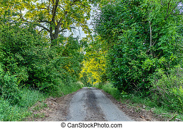 road to forest in countryside