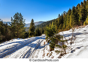 road to mountain forest in winter