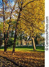road to park in autumn yellow leaves - in autumn yellow...