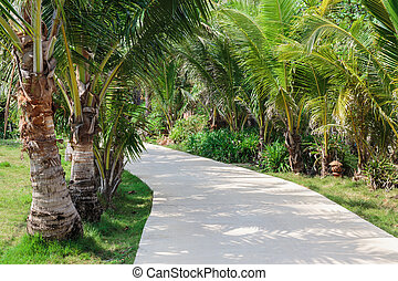 Road to the palm grove