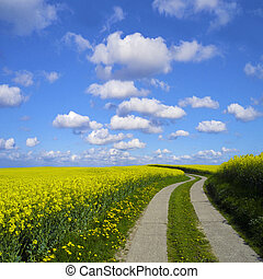 road to the sky - s-shaped way through a canola field