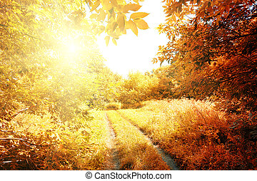 Road to the sun in autumn forest