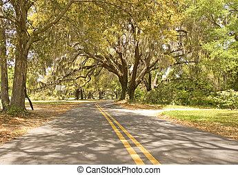 Road Under Sun Dappled Oaks