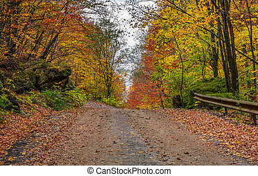 road uphill in autumn forest on overcast day - asphalt road...