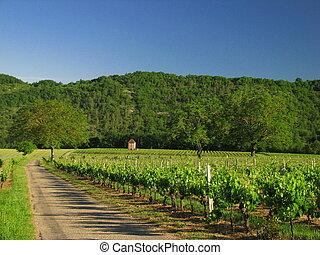 Road, Vine, vineyard