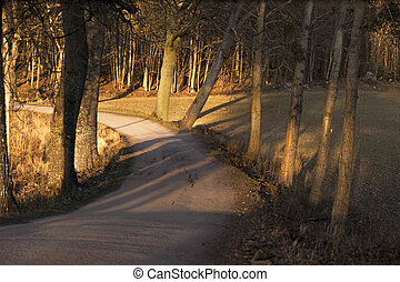 road with bare trees on sunny day