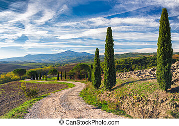 Road with cypress trees in Tuscany
