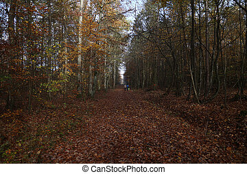Road with fallen leaves in autumn forest