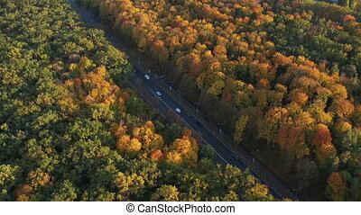 Road with good asphalt for cars between the trees of a large urban forest, top view. Sunny and warm weather for a walk in the forest. Beautiful autumn forest from a height. Road for cars from above.