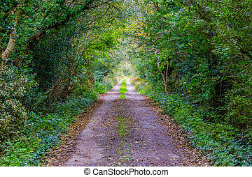 Road with Green tunnel in a forest