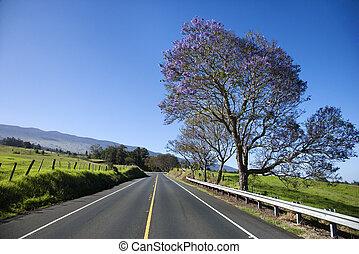 Road with Jacaranda tree in Maui.