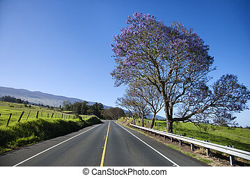 Road with Jacaranda tree in Maui.