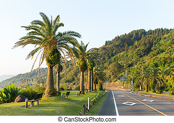 Road with palm tree