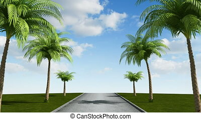 Road with palm trees, loop