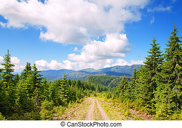 road in the mountains with pine trees
