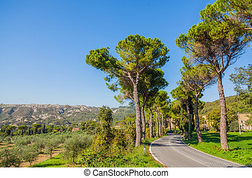 Road with pine trees Tuscany
