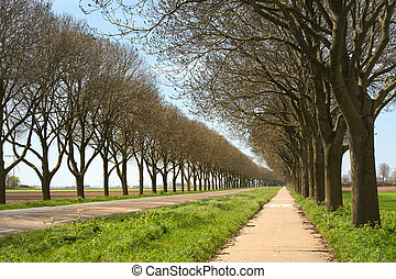 Road with rows of trees