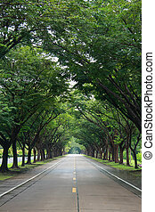 road with tree both side