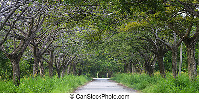 Road with tunnel of trees