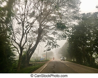 road/forest, körülvett, fa, nyom, eredő, köd
