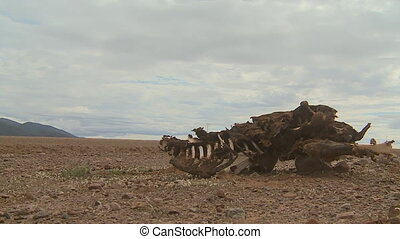 Roadside Carcass On Altiplano Desert, Bolivia - Medium...