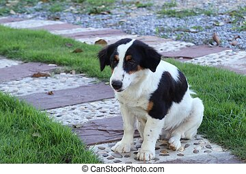 Roadside dog on grass