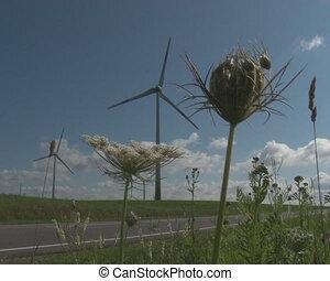 roadside plant windmill - Roadside meadow plants and...