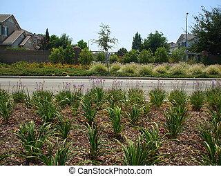 Roadside Planting