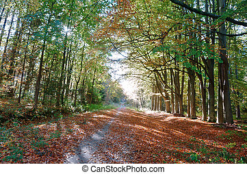 trees on the edges of the highway, road in autumn