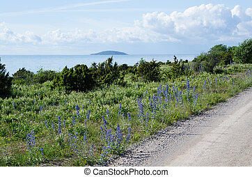 Roadside view at blue flowers by the coast