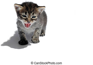 roaring cat with long shadow on white background