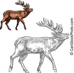 Roaring deer sketch animal with large antlers - Deer or...