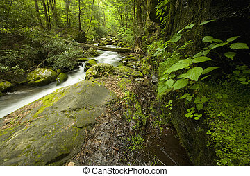 Roaring Fork, Great Smoky Mtns NP, TN