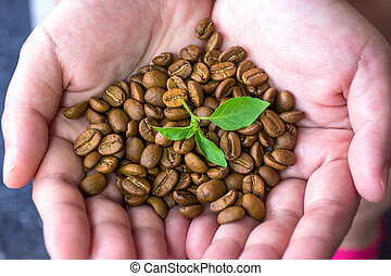 Roasted coffee beans in the hand