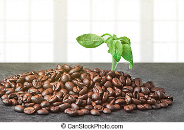 Roasted Coffee Beans with Green Leaves on the Black Table near Window