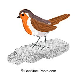 Robin bird chickadee on the stone vector illustration