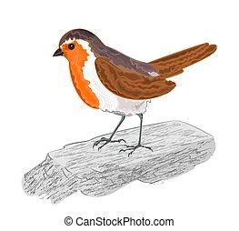 Robin bird chickadee on the stone vector illustration