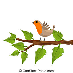 Robin bird on branch - Funny robin bird on the tree branch...