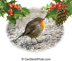 Robin on frosty ground