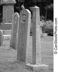 Robin on a headstone - black and white image of a robin on a...