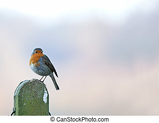 Robin on Post copy space