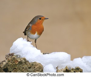 Robin. - Robin, Erithacus rubecula