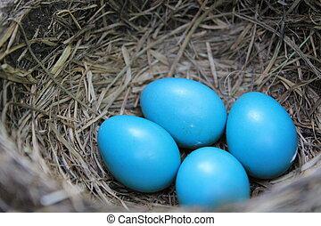 Robin's Eggs - Robin Eggs in late Spring