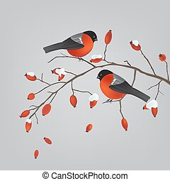 Robins on a rose hips branch